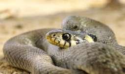 heimische schlangen bayern